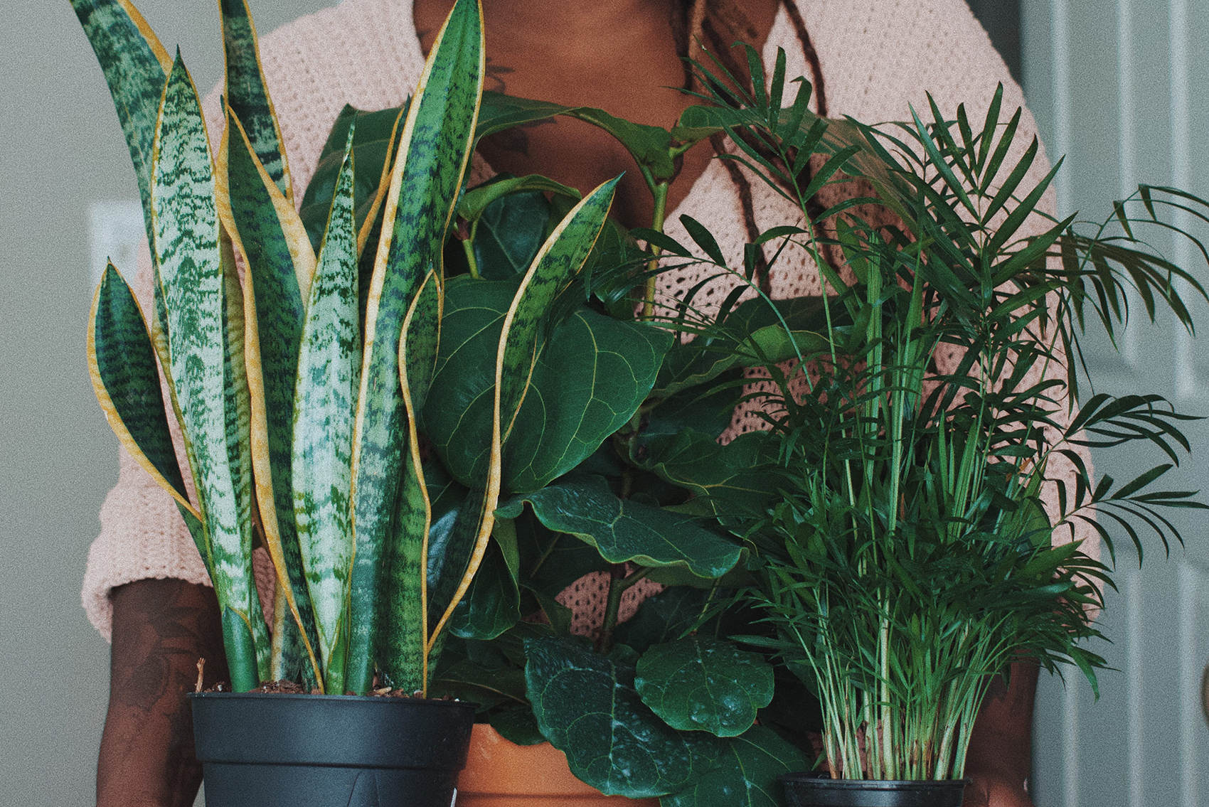 woman holding indoor plants